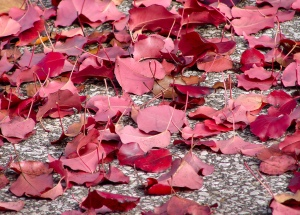 Fall seaon- photo pin