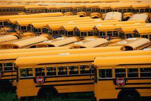 Yard of school buses