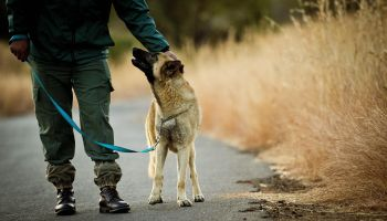 Dogs Trained To Stop Rhino Poaching - M24